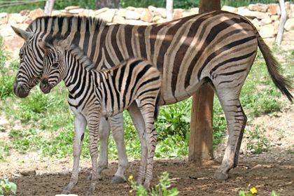 Chov v roce 2019: Zoo Jihlava