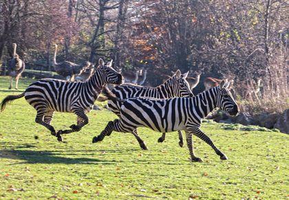 Chov v roce 2020: Zoo Plzeň