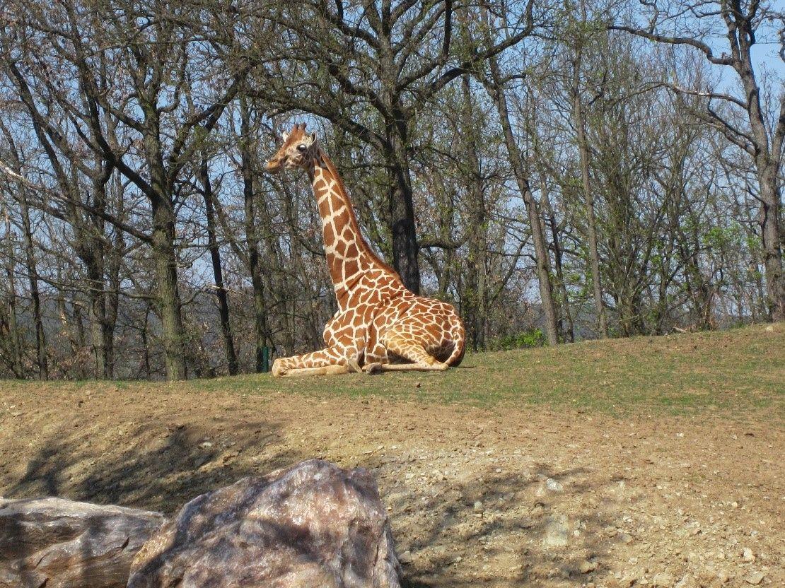 Chov v roce 2019: Zoo Brno
