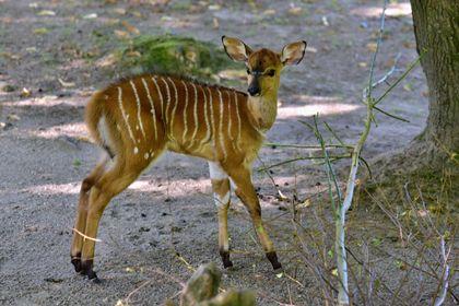 Rozmarné léto v liberecké zoo