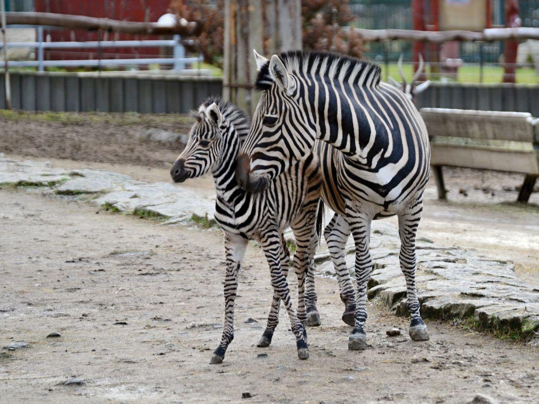 Chov v roce 2020: Zoo Liberec