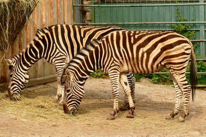 Chov v roce 2020: Zoo Spišská Nová Ves