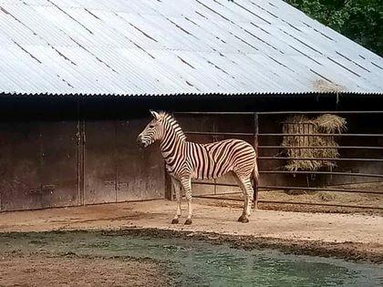 Chov v roce 2020: Zoo Hodonín