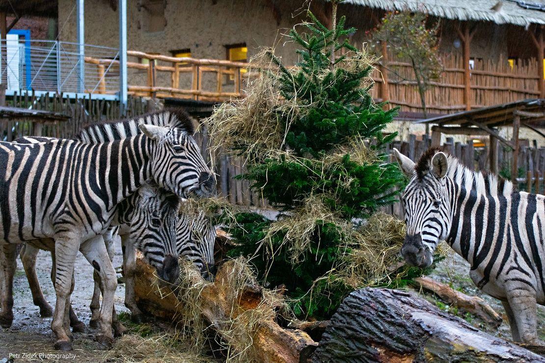 Chov v roce 2020: Zoo Jihlava