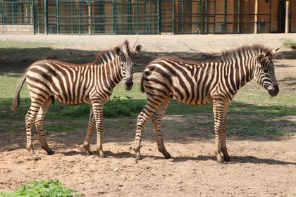 Chov v roce 2019: Zoo Plzeň