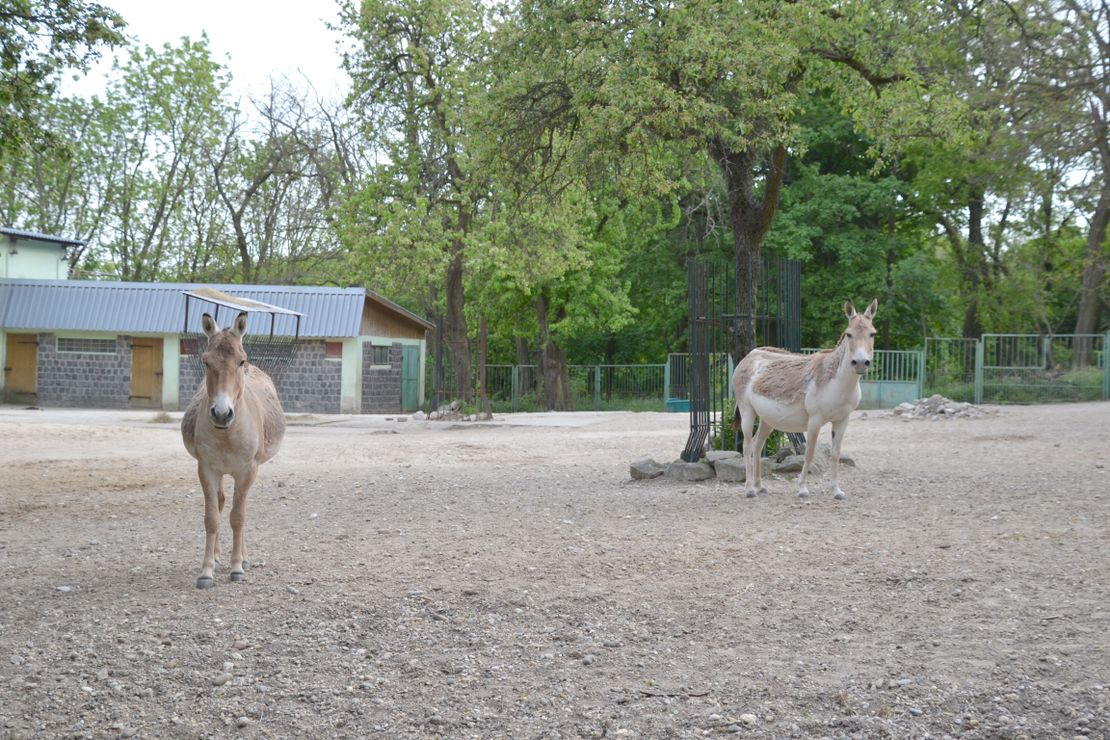Chov v roce 2020: Zoo Bratislava