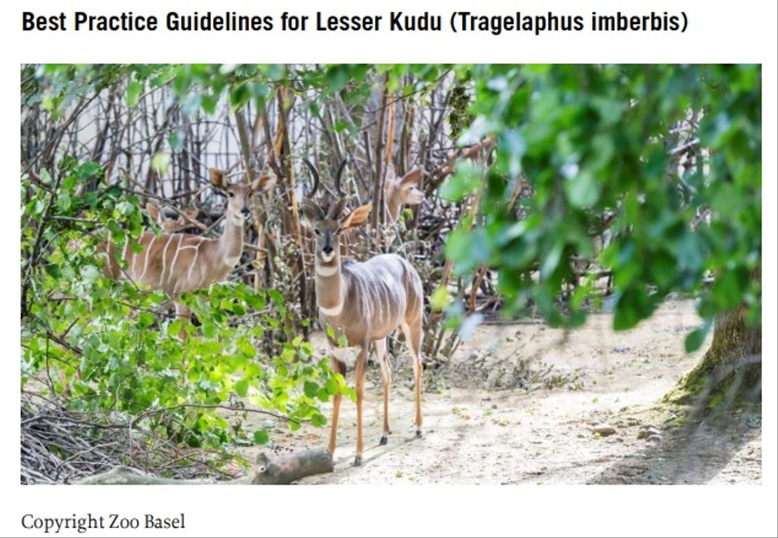 Praktická doporučení k chovu kudu malého (Tragelaphus imberbis)