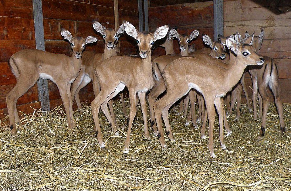 Program zasedání komise pro antilopy