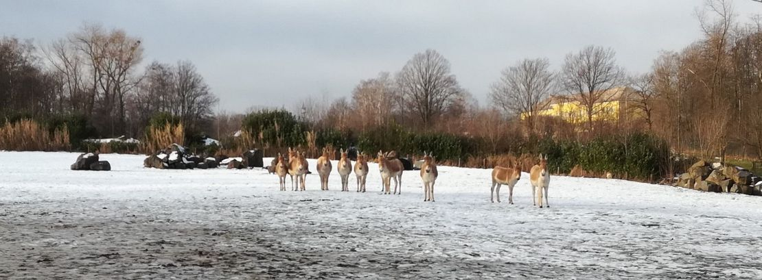 Chov v roce 2020: Zoo Ostrava